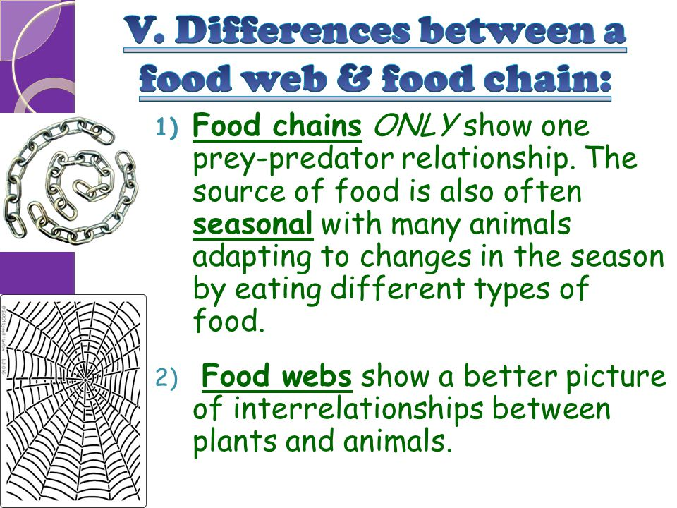 V. Differences between a food web & food chain: