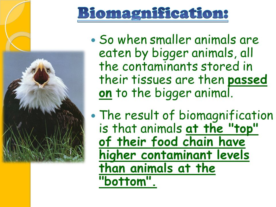 Biomagnification: