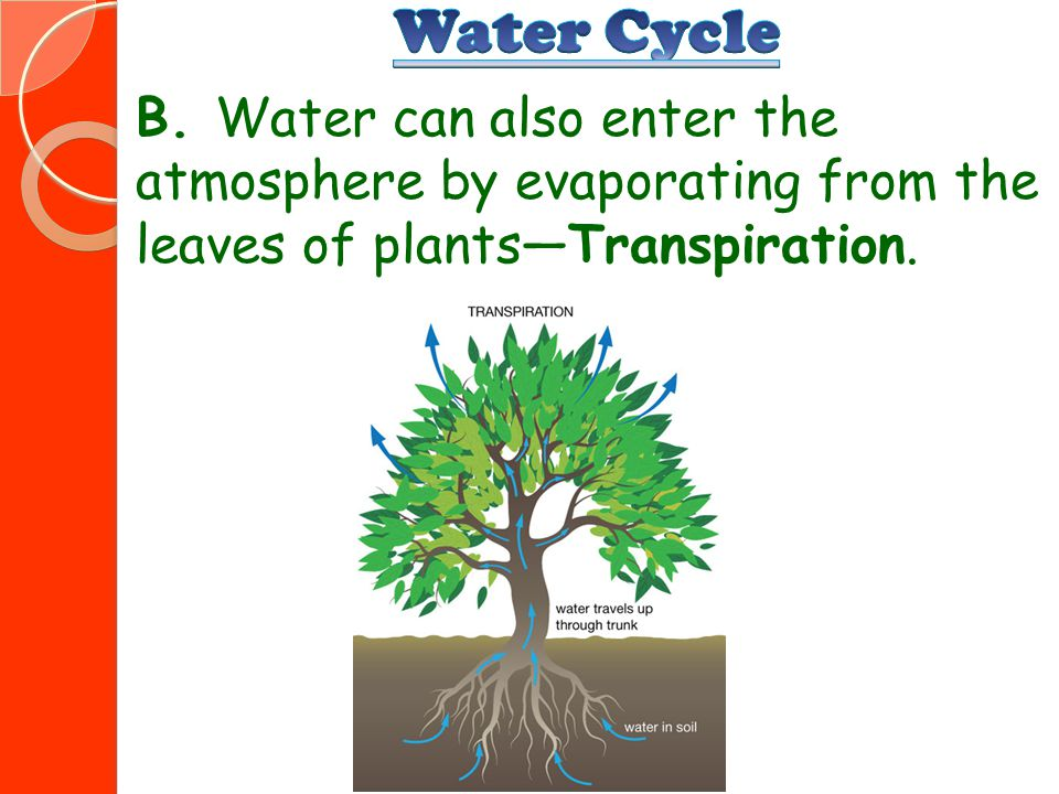 Water Cycle B.