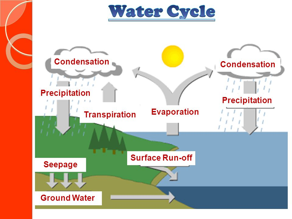 Water Cycle Condensation Precipitation Precipitation Transpiration