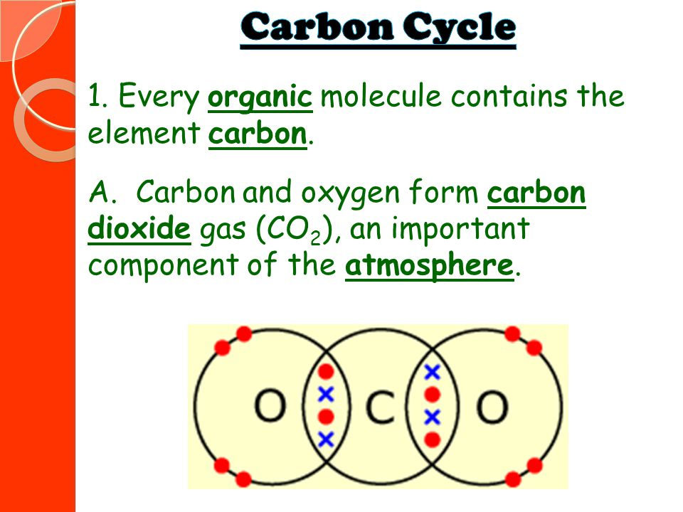 Carbon Cycle 1. Every organic molecule contains the element carbon.