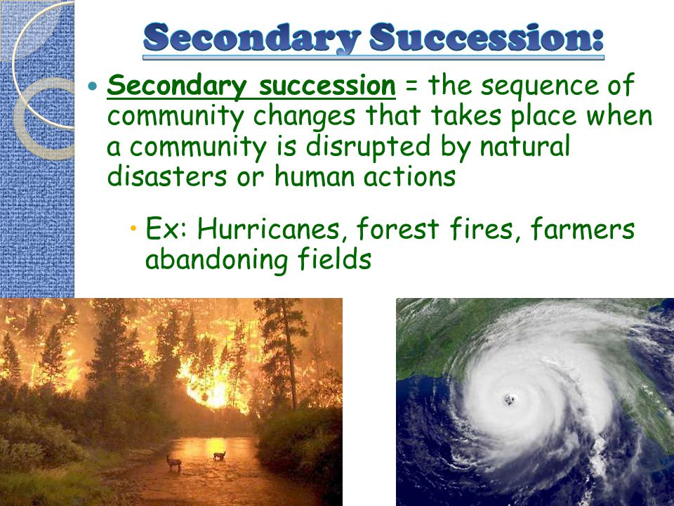 Secondary Succession: