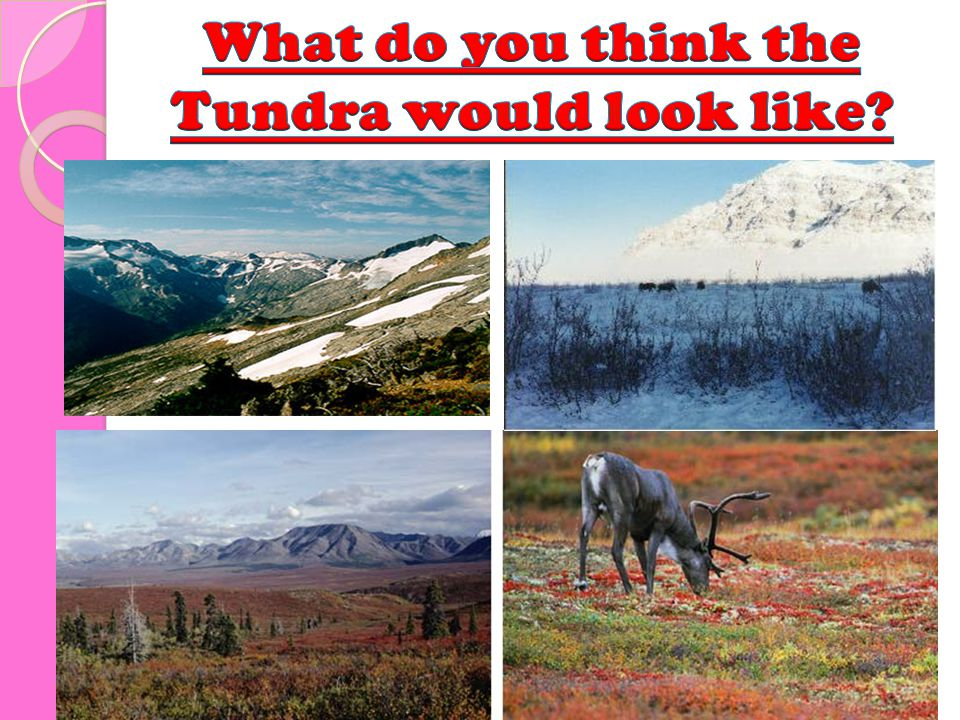 What do you think the Tundra would look like