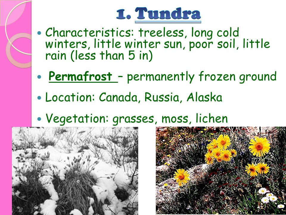 1. Tundra Characteristics: treeless, long cold winters, little winter sun, poor soil, little rain (less than 5 in)