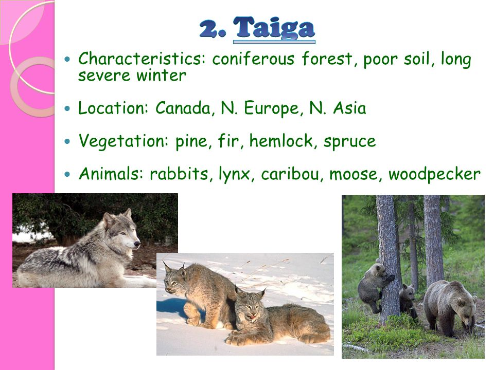2. Taiga Characteristics: coniferous forest, poor soil, long severe winter. Location: Canada, N. Europe, N. Asia.
