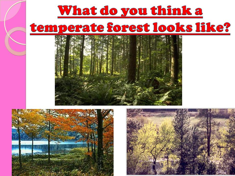 What do you think a temperate forest looks like