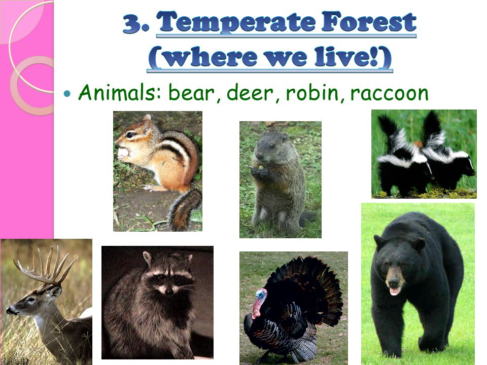 3. Temperate Forest (where we live!)