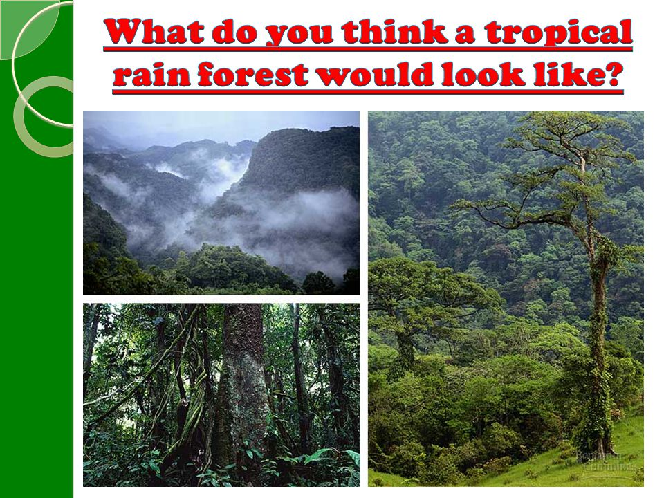 What do you think a tropical rain forest would look like