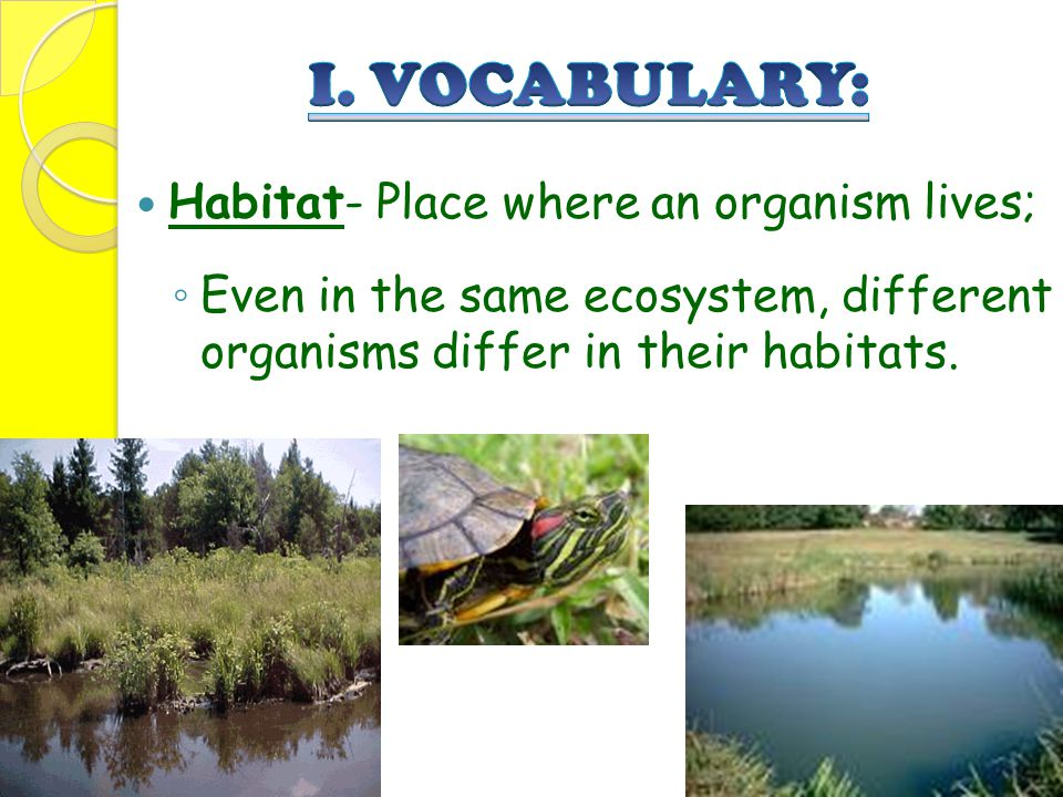 I. VOCABULARY: Habitat- Place where an organism lives;