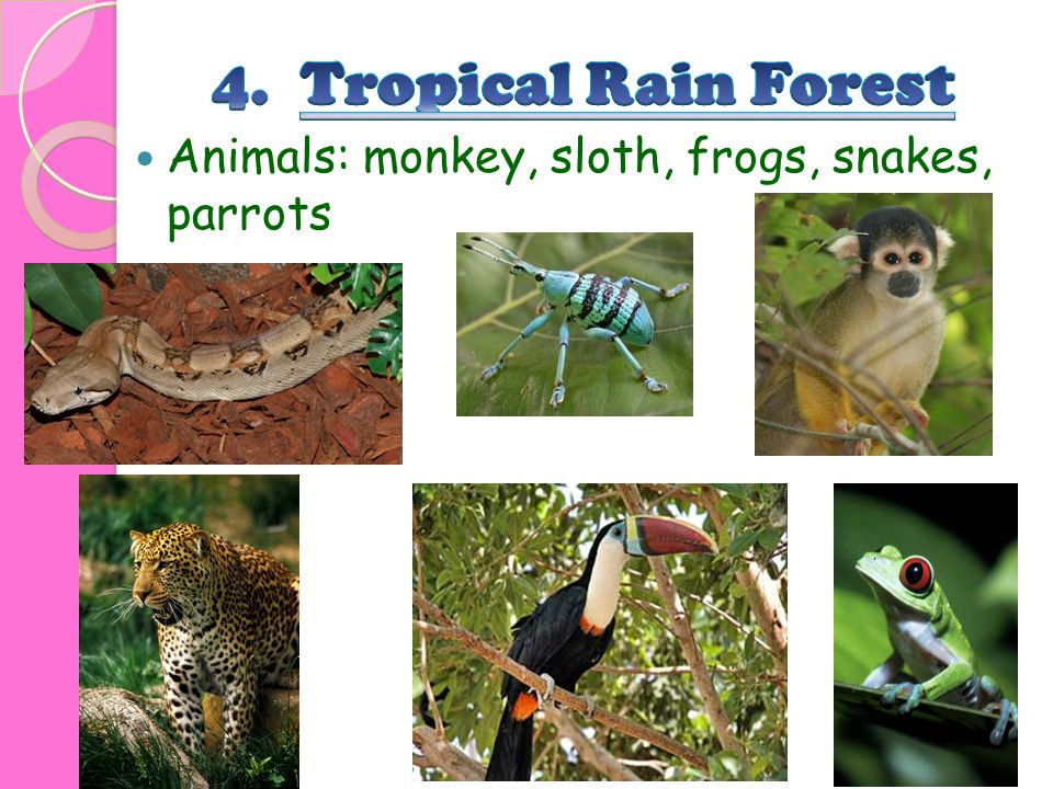 4. Tropical Rain Forest Animals: monkey, sloth, frogs, snakes, parrots