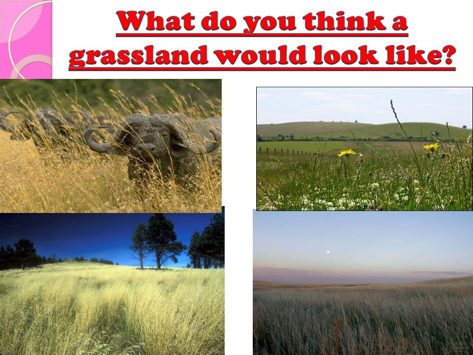 What do you think a grassland would look like