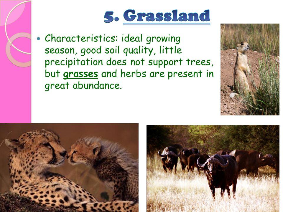 5. Grassland