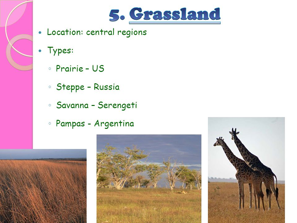 5. Grassland Location: central regions Types: Prairie – US