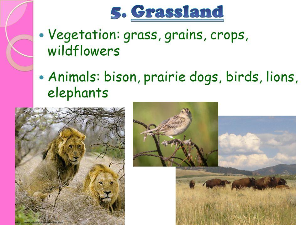 5. Grassland Vegetation: grass, grains, crops, wildflowers