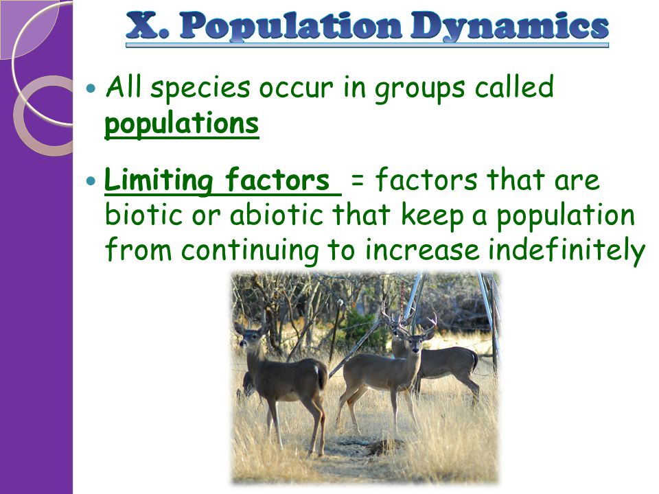 X. Population Dynamics All species occur in groups called populations