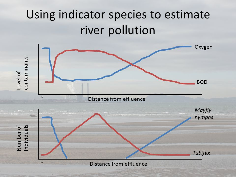 Using indicator species to estimate river pollution