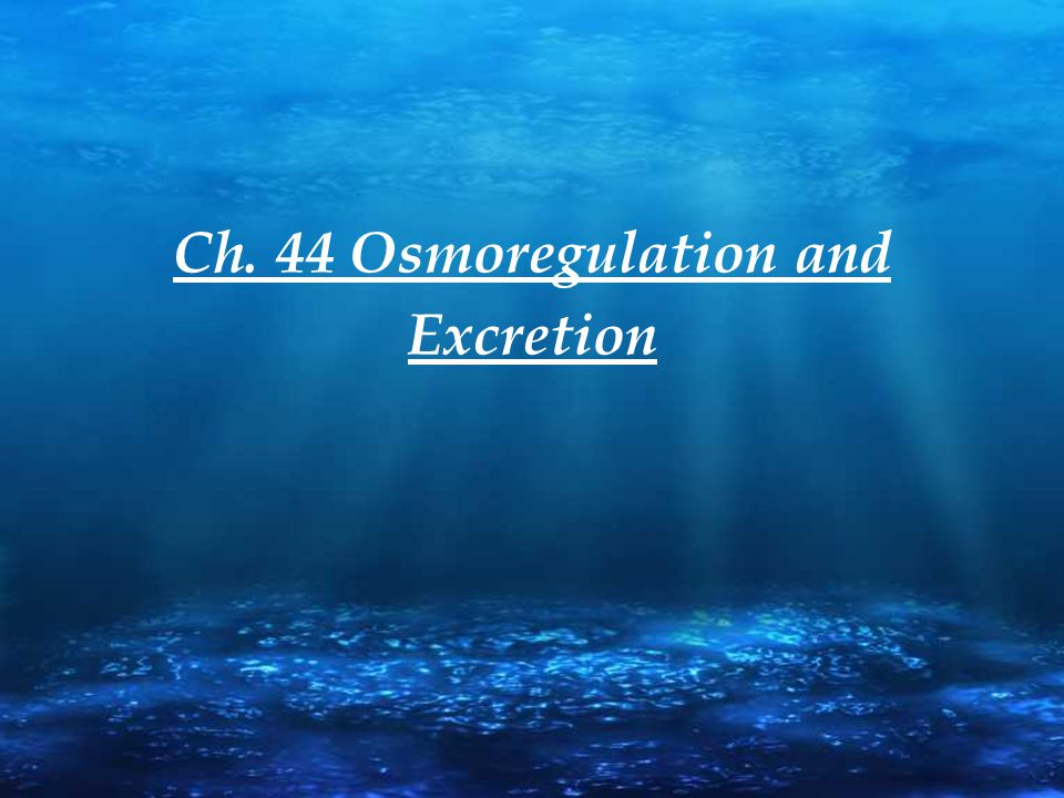 Ch. 44 Osmoregulation and Excretion