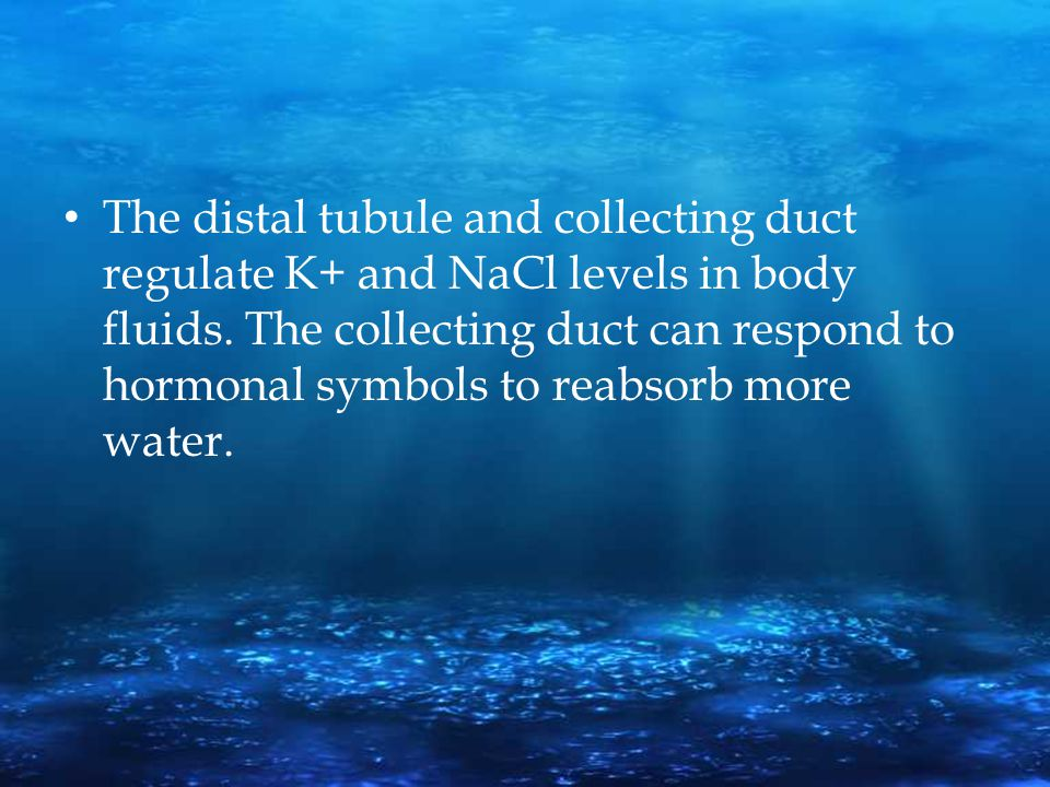 The distal tubule and collecting duct regulate K+ and NaCl levels in body fluids.