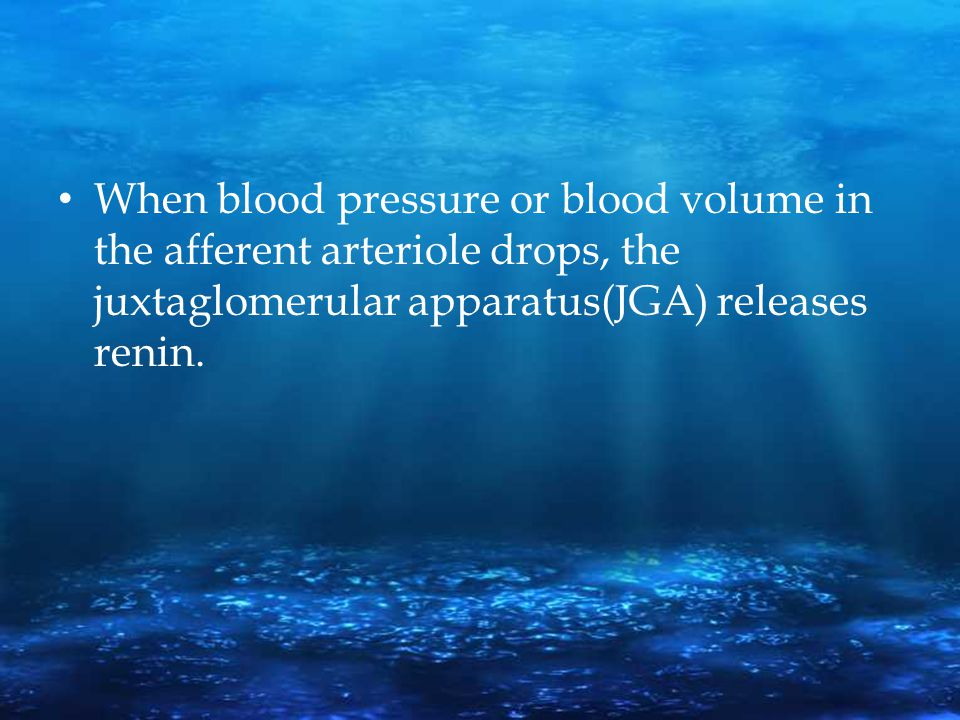 When blood pressure or blood volume in the afferent arteriole drops, the juxtaglomerular apparatus(JGA) releases renin.