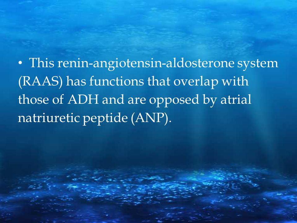 This renin-angiotensin-aldosterone system (RAAS) has functions that overlap with those of ADH and are opposed by atrial natriuretic peptide (ANP).