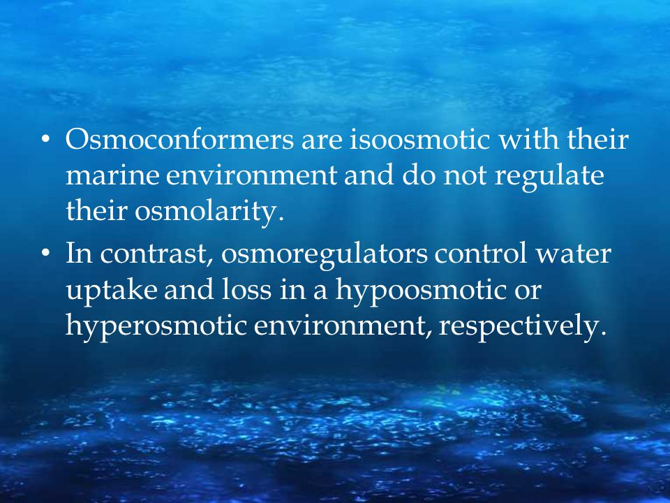 Osmoconformers are isoosmotic with their marine environment and do not regulate their osmolarity.