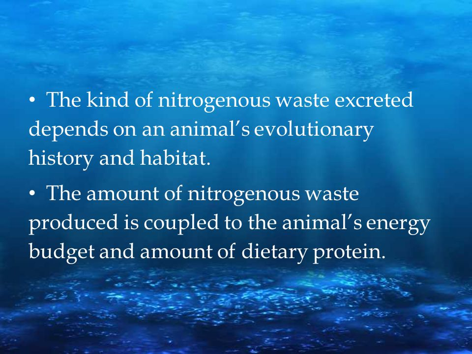 The kind of nitrogenous waste excreted depends on an animal's evolutionary history and habitat.