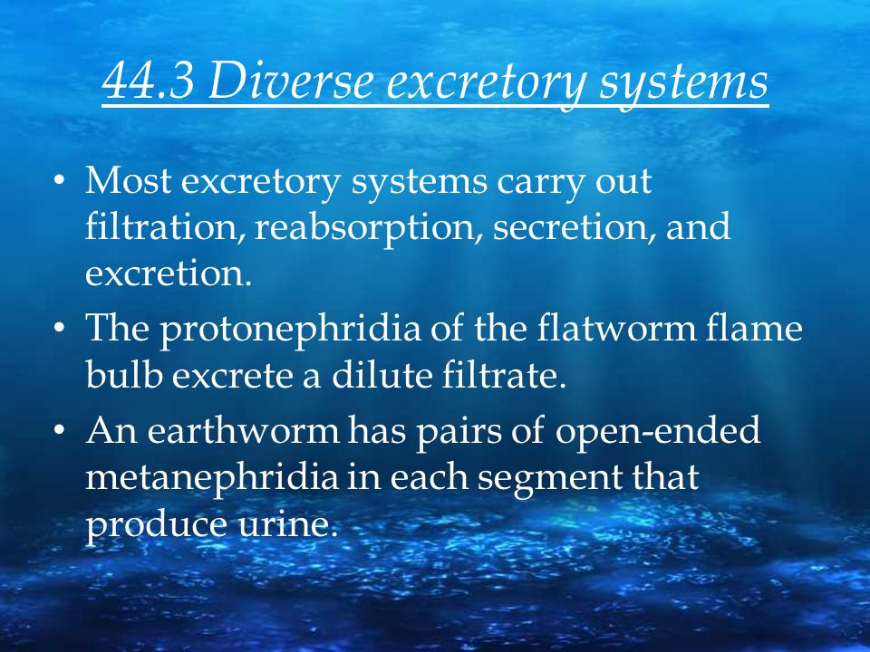 44.3 Diverse excretory systems