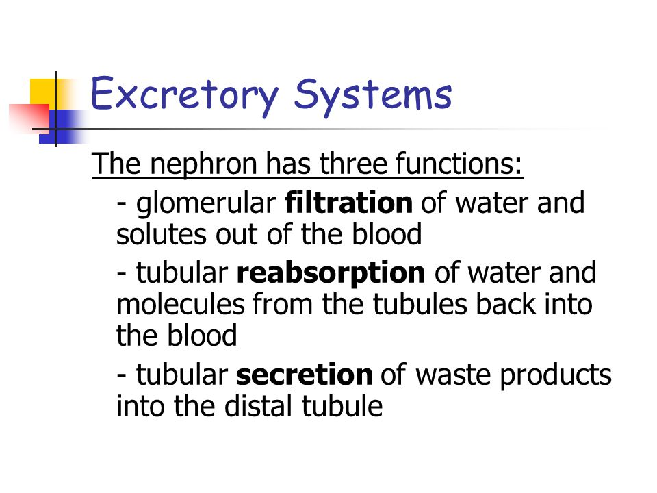 Excretory Systems The nephron has three functions:
