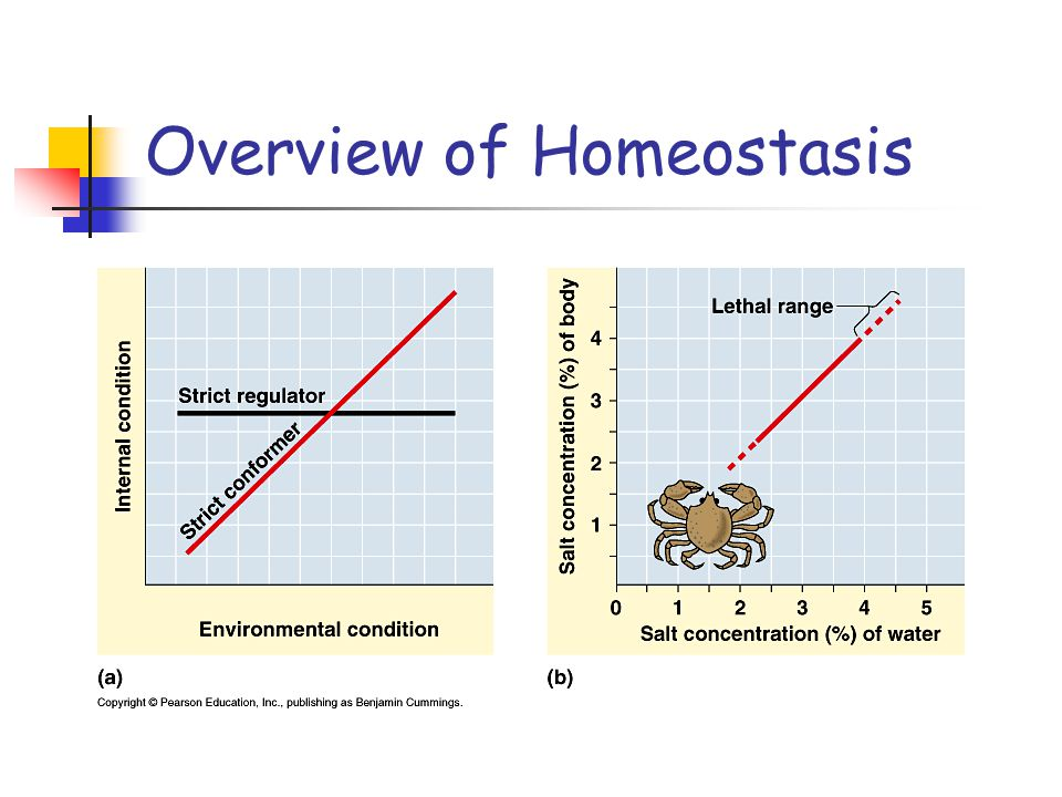 Overview of Homeostasis