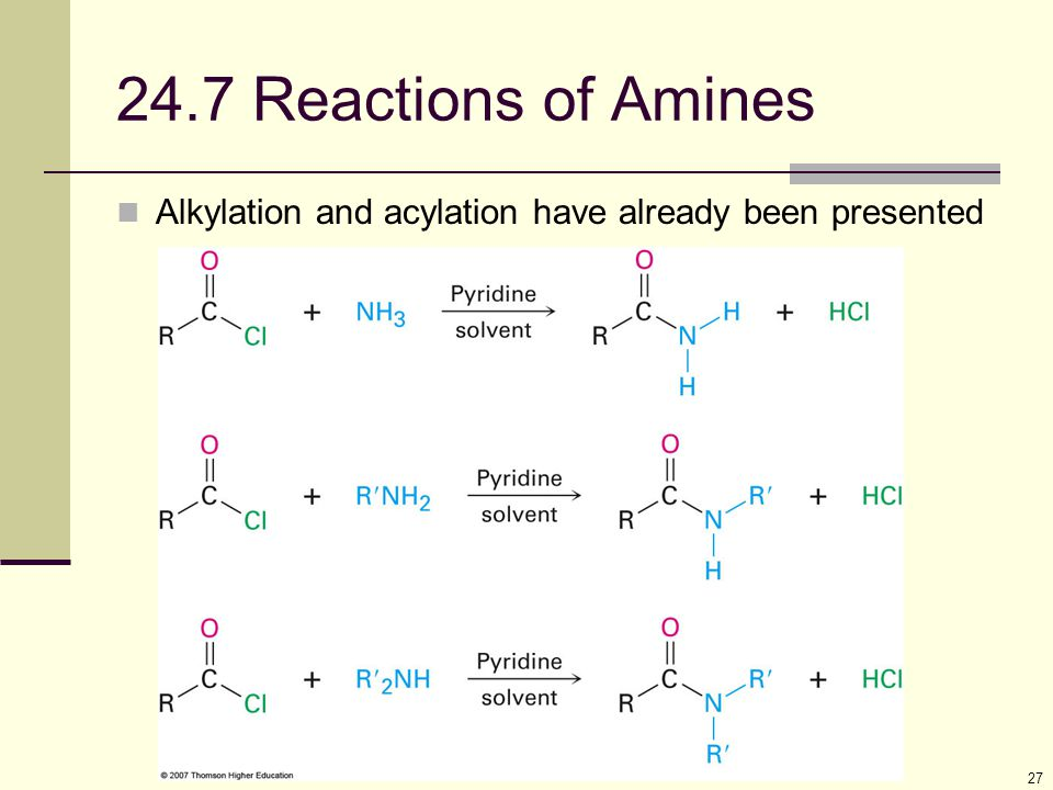 24.7 Reactions of Amines Alkylation and acylation have already been presented