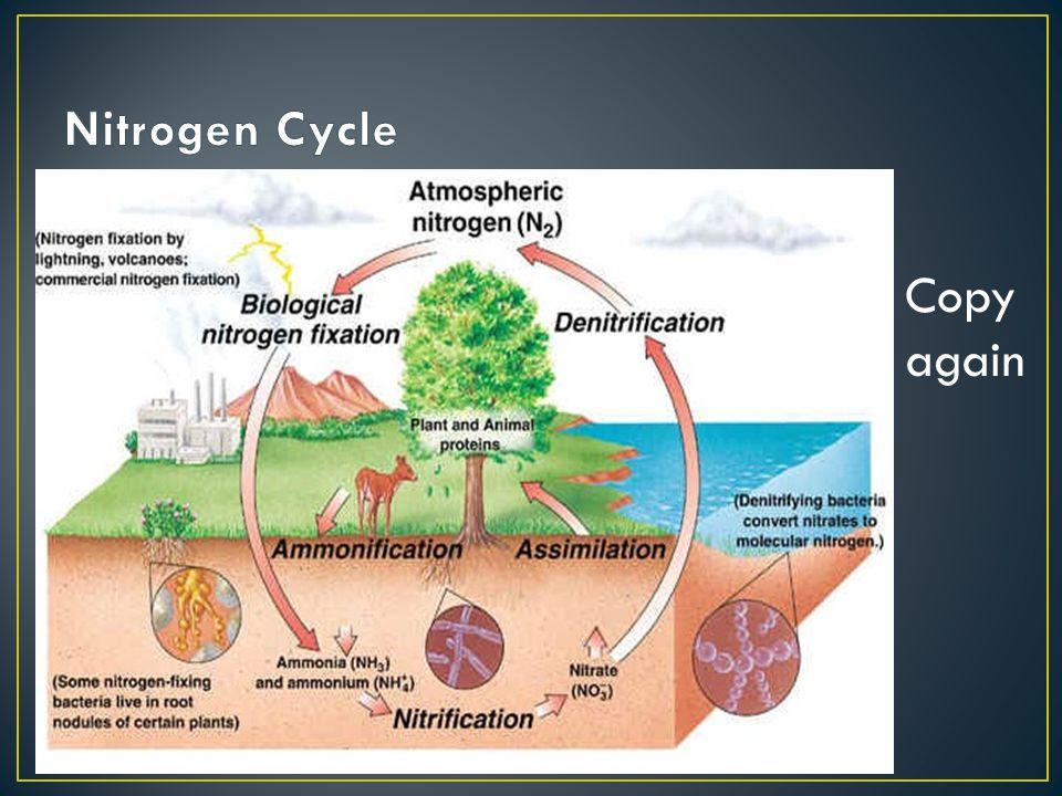 Nitrogen Cycle Copy again