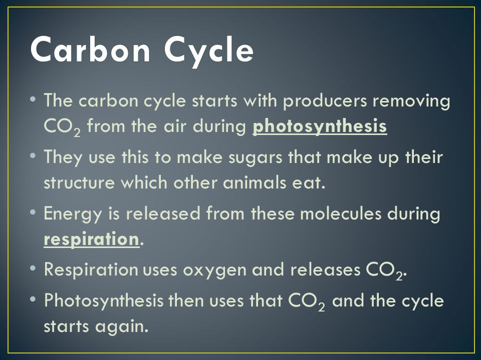Carbon Cycle The carbon cycle starts with producers removing CO2 from the air during photosynthesis.