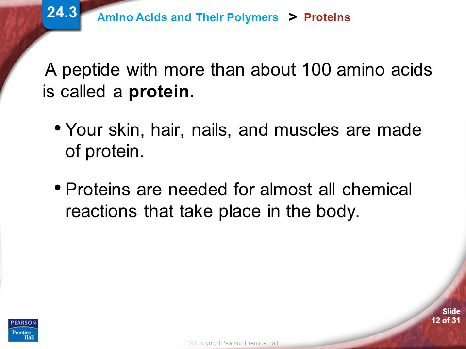 A peptide with more than about 100 amino acids is called a protein.