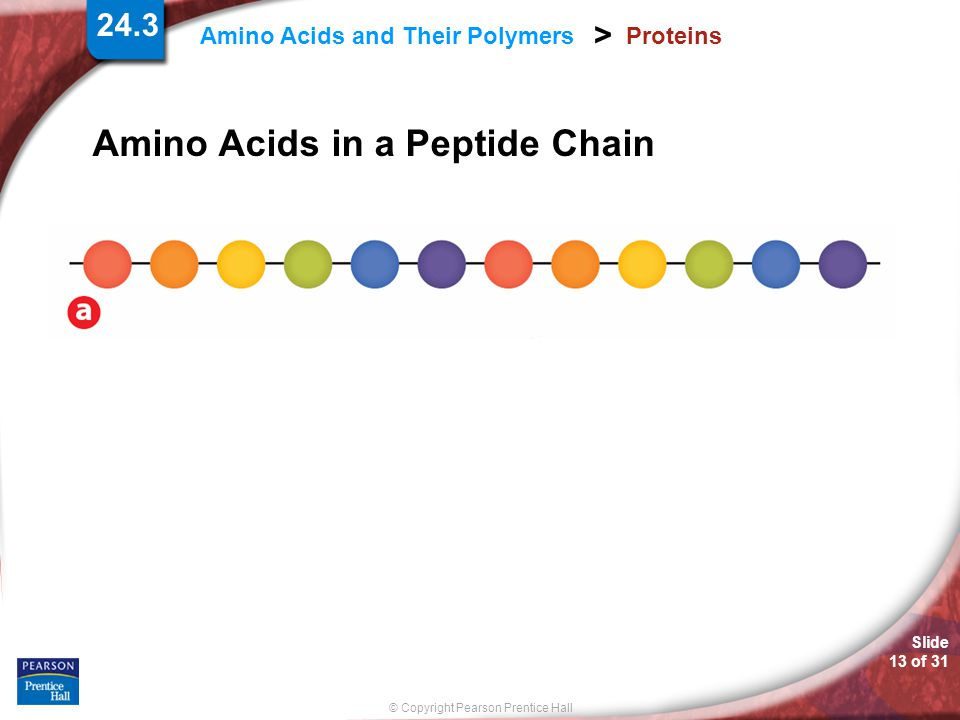 Amino Acids in a Peptide Chain