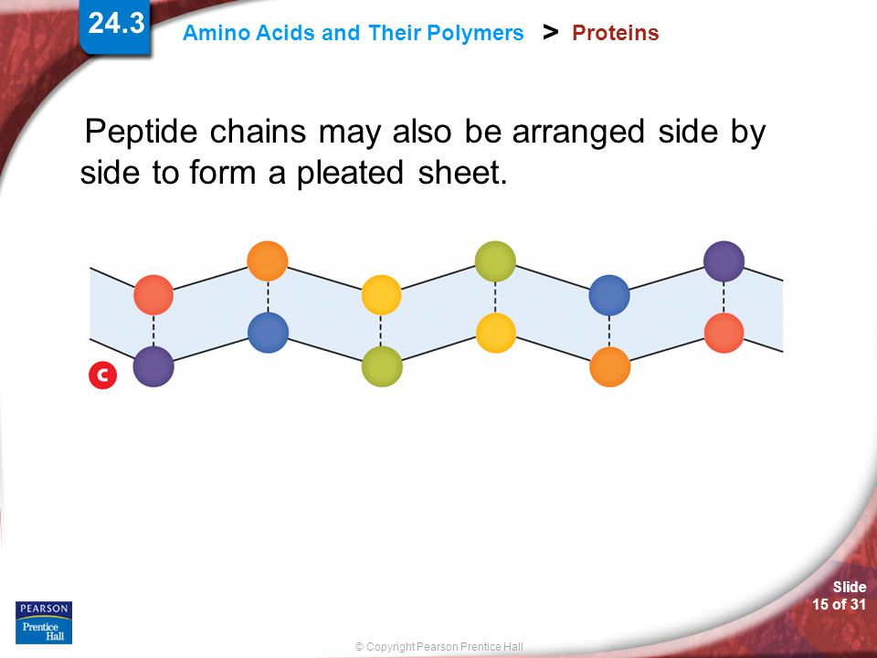 Proteins Peptide chains may also be arranged side by side to form a pleated sheet.