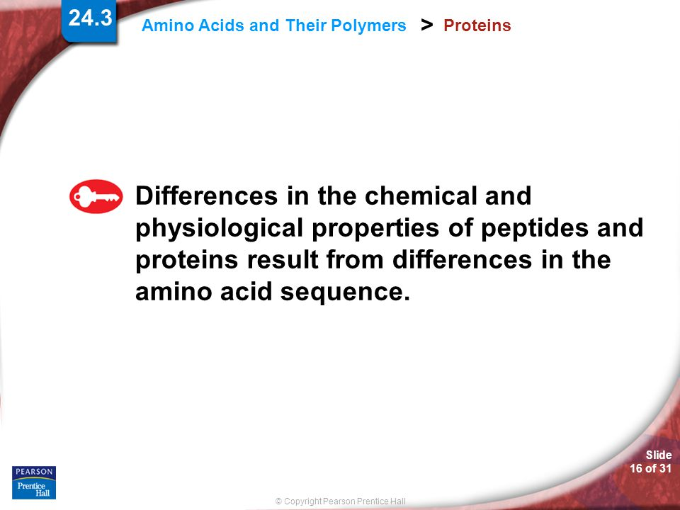 Proteins Differences in the chemical and physiological properties of peptides and proteins result from differences in the amino acid sequence.