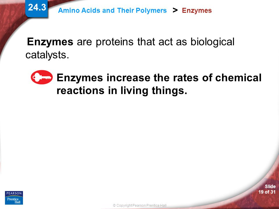 Enzymes are proteins that act as biological catalysts.