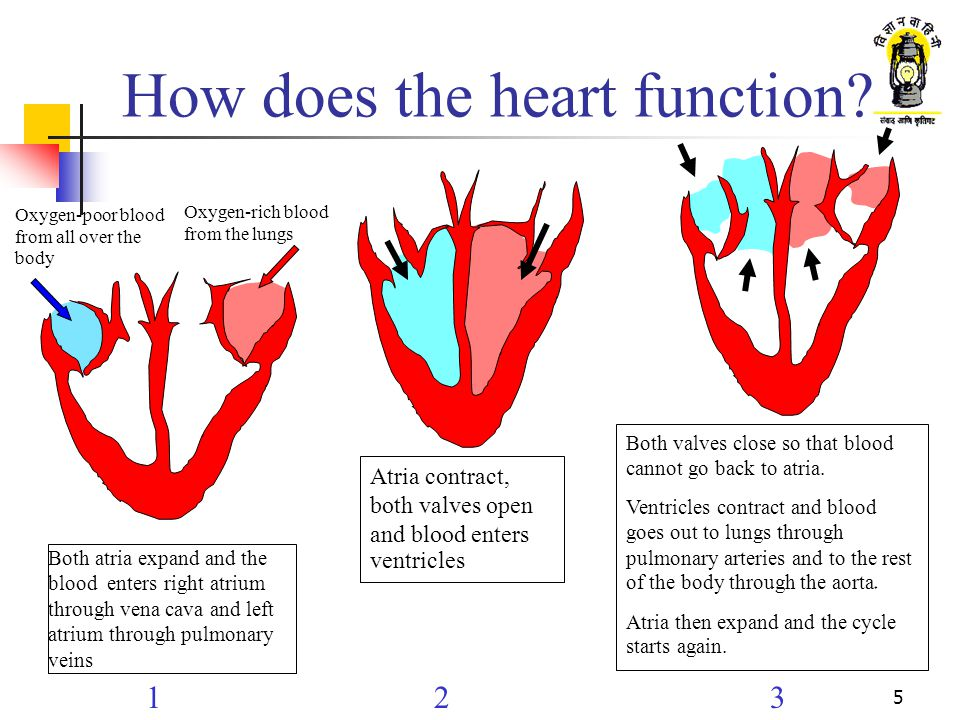 How does the heart function