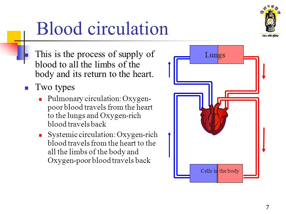 Blood circulation Lungs. This is the process of supply of blood to all the limbs of the body and its return to the heart.