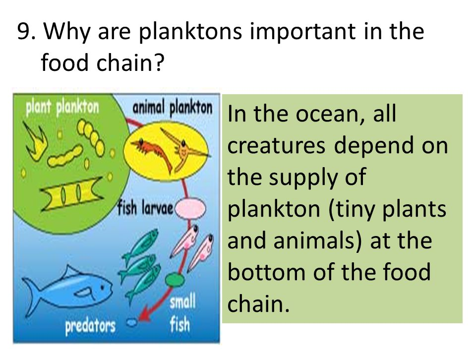 9. Why are planktons important in the