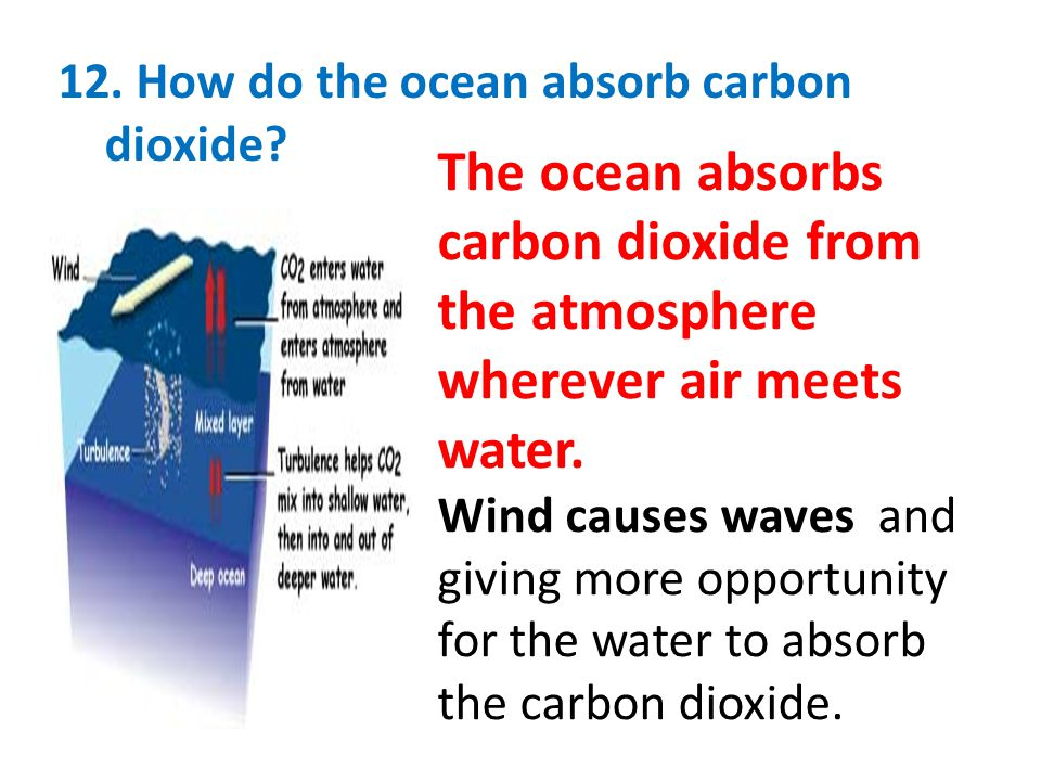 12. How do the ocean absorb carbon