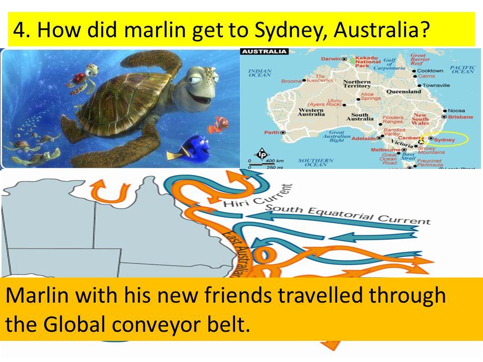 4. How did marlin get to Sydney, Australia