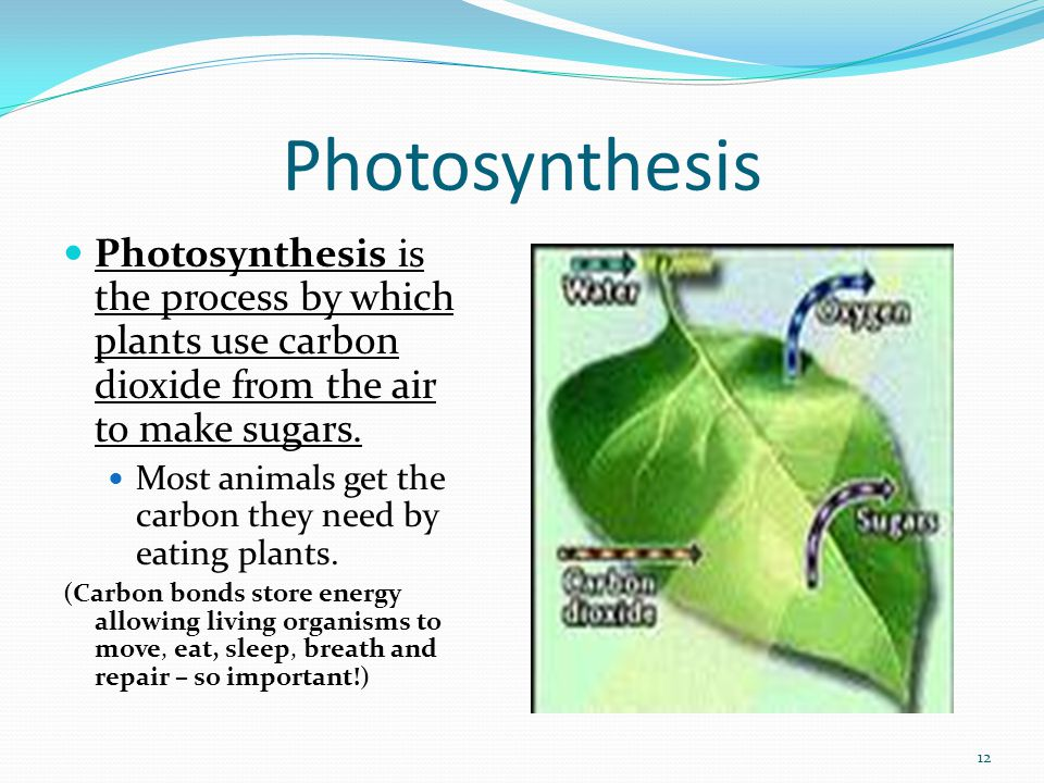 Photosynthesis Photosynthesis is the process by which plants use carbon dioxide from the air to make sugars.