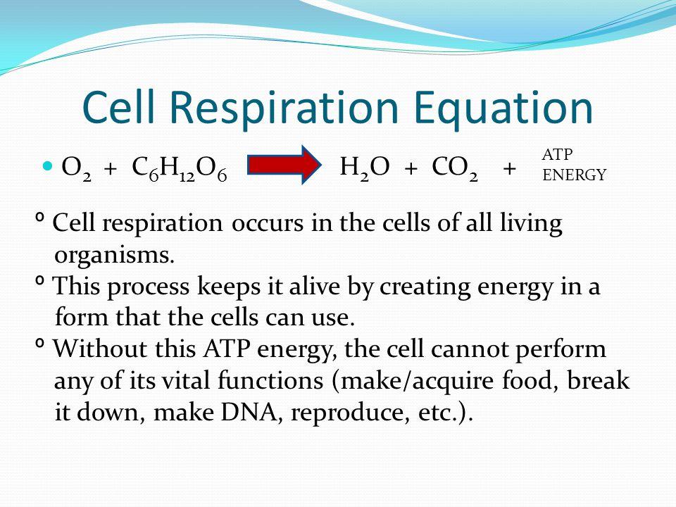 Cell Respiration Equation