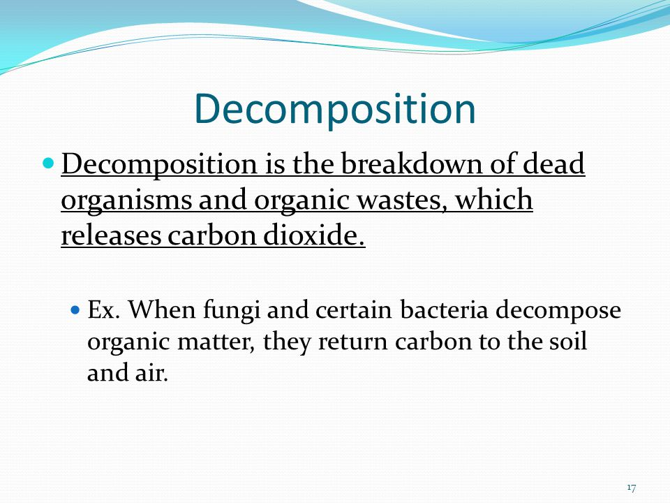Decomposition Decomposition is the breakdown of dead organisms and organic wastes, which releases carbon dioxide.