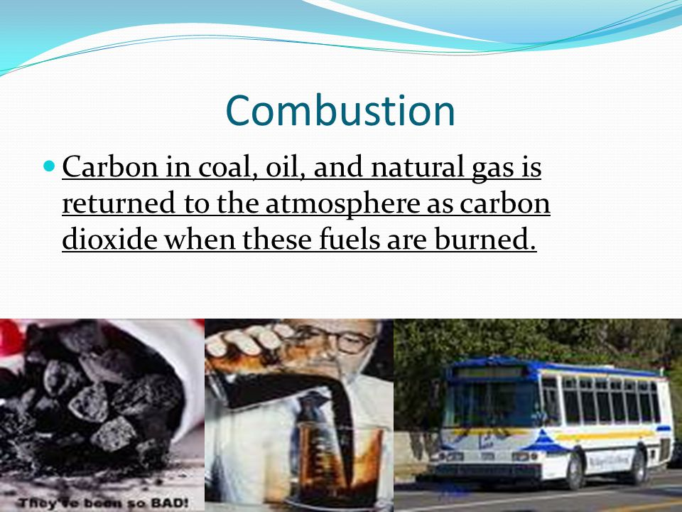 Combustion Carbon in coal, oil, and natural gas is returned to the atmosphere as carbon dioxide when these fuels are burned.