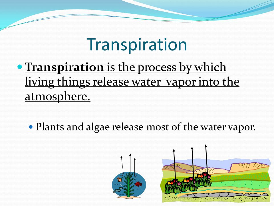 Transpiration Transpiration is the process by which living things release water vapor into the atmosphere.