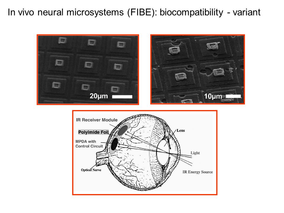 In vivo neural microsystems (FIBE): biocompatibility - variant