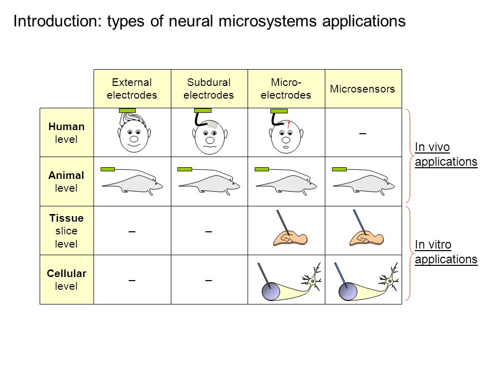 Introduction: types of neural microsystems applications