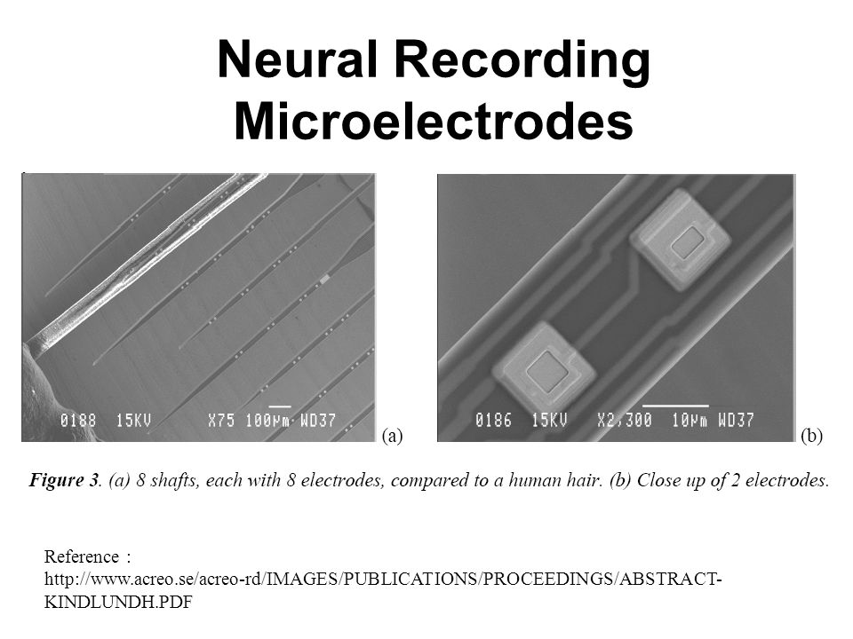 Neural Recording Microelectrodes